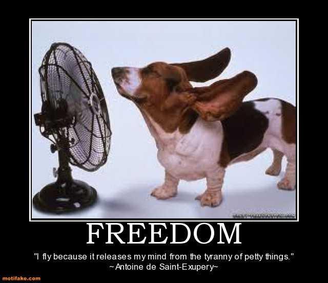 freedom-fly-freedom