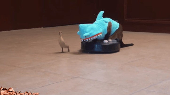 sharkat