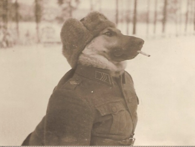 militarydog