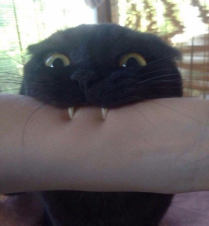 CatsnekAttack