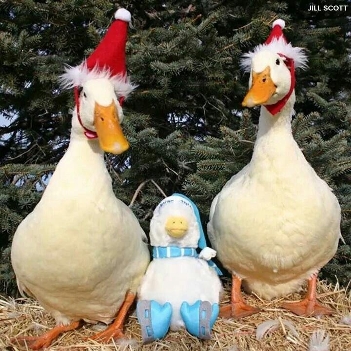 DuckXmas