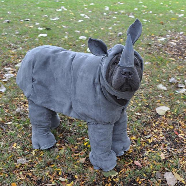 rhinodoggo