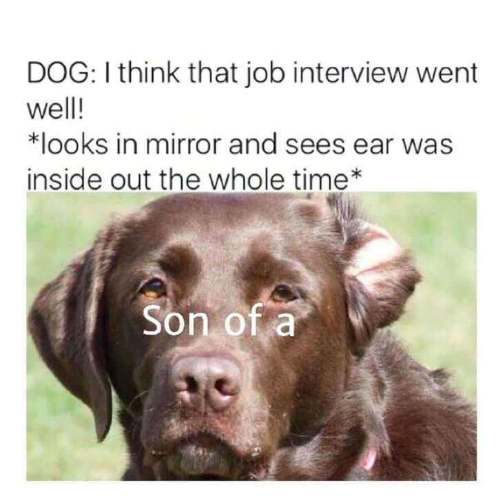 DogJob