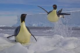 LinuxWings