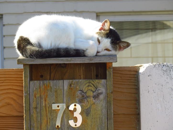 NeighbourCat