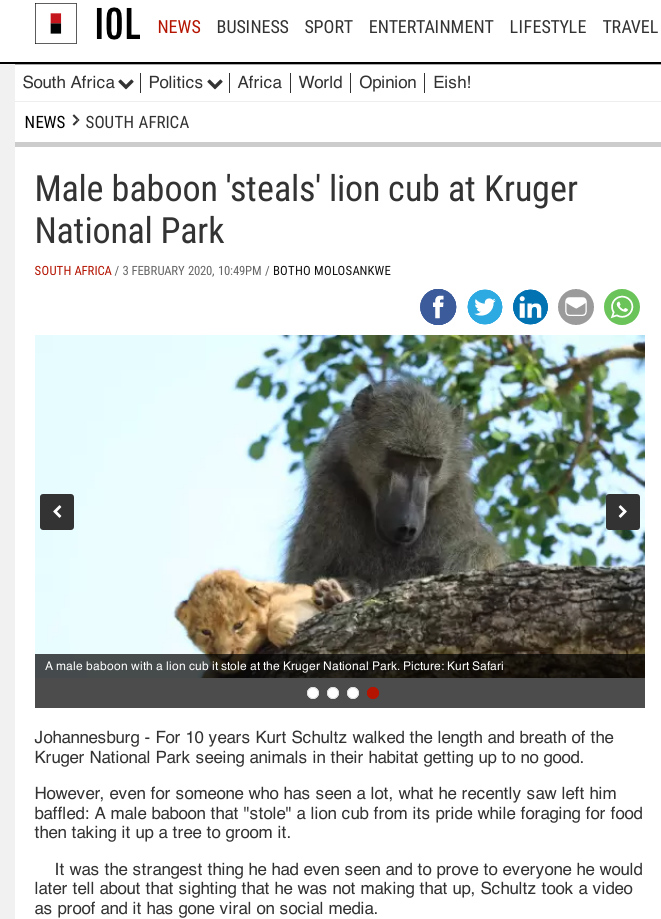 BaboonLion